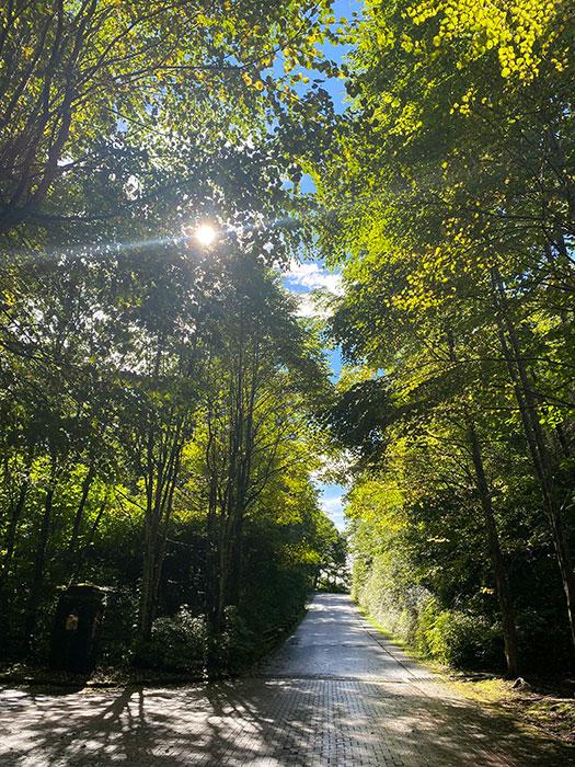 木洩れ日と木々
